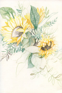 Colored pencils drawing of bouquet of sunflowers