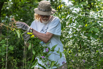 Volunteer Removes Invasive Species From Banks of Milwaukee River,