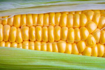 fresh and ripe corn cobs