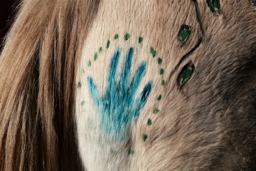 Native American painted horse for ceremonial purposes.