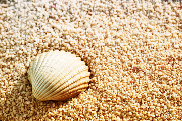 Vacation background with sea shell, soft focus, copy space