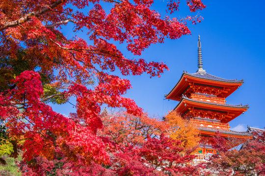 京都 清水寺の紅葉