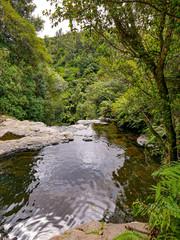 scenic Kaituna River, Rotorua  in the tropical forest in New Zealand