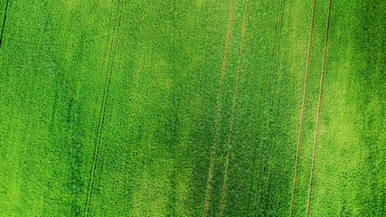 aerial view of grass  field. natural green spring summer background. drone shot