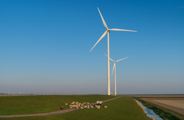 Sheep and modern wind turbines in the countryside. Groningen, Holland.