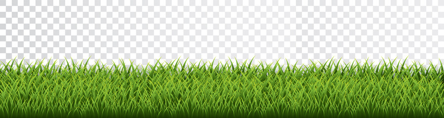 Green grass border set on transparent background. Vector Illustration Fotomurales