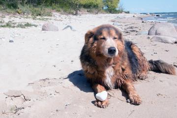 Hund mit Herz aus Stein am Strand Insel Rügen