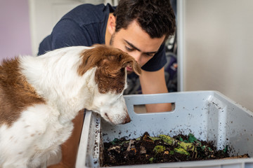 A man and his dog look into a worm farm in their apartment