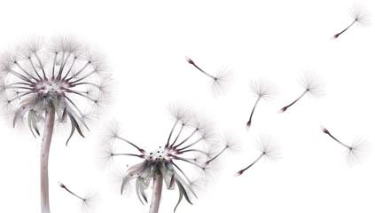 Fototapeta Dandelion card Vector watercolor. Summer floral frame decors