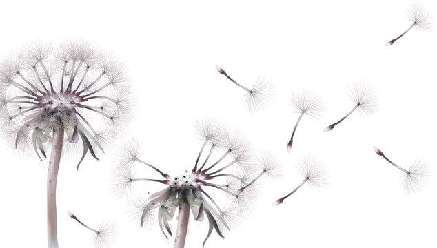Dandelion card Vector watercolor. Summer floral frame decors