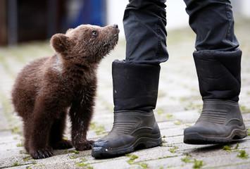 "Orphaned baby bear named ""Aida"" stands next to Zakir Becar in Gunjani village near Sarajevo"