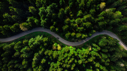 Winding road trough dense pine forest. Aerial drone view, top down