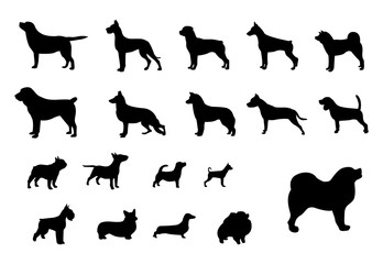 Dog breeds. Set of black silhouettes of dogs of different breeds. Dogs from the smallest to the largest. Vector illustration.