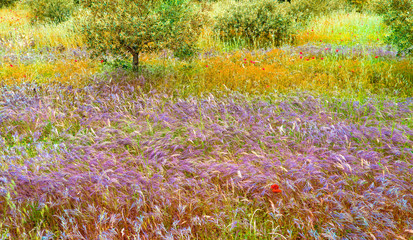 Printed roller blinds Natuur Provence Frankrijk wilde natuur