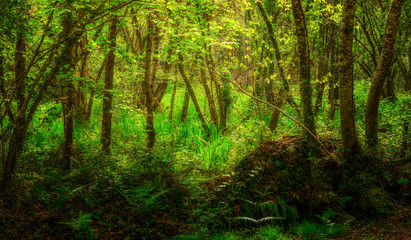 Landschaft Auwald im Frühling in zauberhaftem Licht - Landscape lowland forest in spring in magical light