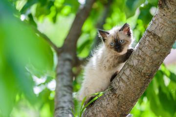 Cute curious kitten cat climbing tree ready to jump