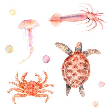 watercolor set ocean, sea: turtle, crab, squid, jellyfish, pearls