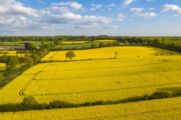 rapeseed_fields
