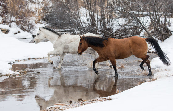 Horse crossing river during winter