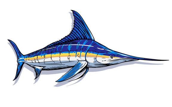 Marlin swordfish. white background illustration