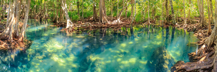 Mangrove and crystal clear water stream canal at Tha Pom Klong Song Nam mangrove wetland, Krabi, Thailand