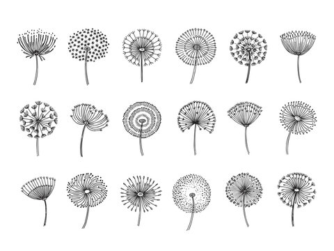 Dandelion set. Doodle hand drawn dandelions monstera delicate plant seeds summer botanical fluff flower isolated vector silhouettes. Illustration of dandelion fluff, botanical flower softness