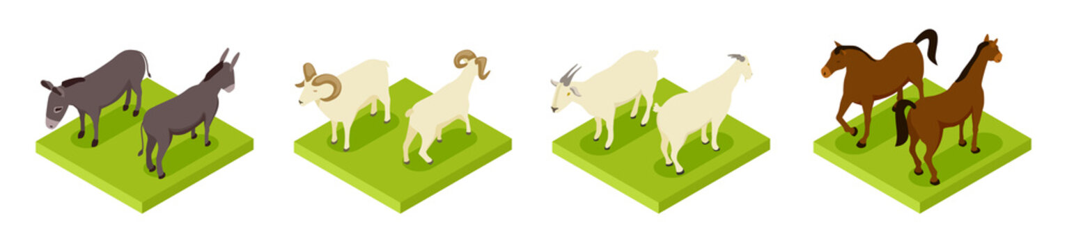 Isometric hoofed cattle. Dunkey, horse, ram and goat 3d vector collection. Illustration of cattle animals, horse and donkey