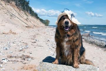 Lustiger Hund mit Hut im Urlaub Insel Rügen