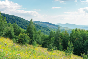 grassy forest glade on the hill in summer. wild flowers and herbs among the tall grass.  high deciduous trees around. nature scenery with cloudy sky. mountain range in the distance