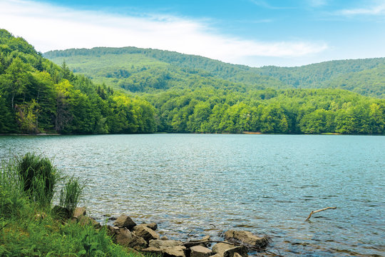 vihorlat lake slovakia. body of water among beech forest in mountains. popular destination in eastern europe. sunny summer weather with clouds on the sky