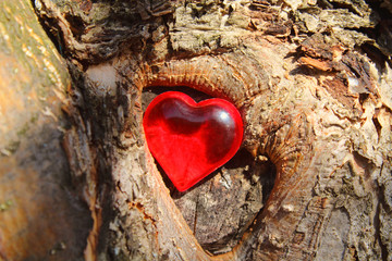 Heart in a tree. The tree of life. Close-up. Background. Texture.
