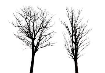 two dead tree
