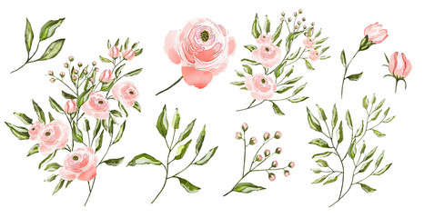 Watercolor illustration. Botanical collection.  Leaves, flowers, branches and other natural elements. All drawings isolated on white background. Pink flowers.