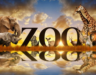 Word Zoo and African animals. Elephant, giraffe, zebra, lion, rhino, kudu and  ostrich on the savannah at sunset.