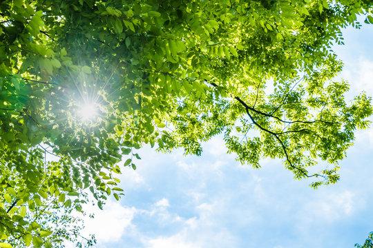 瑞々しい新緑の葉
