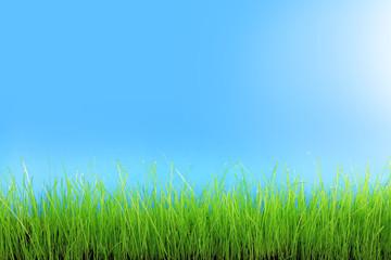 Trawa zielona na tle niebieskiego nieba.