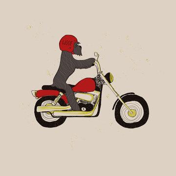 Funny Schnauzer Dog Riding Motorcycle