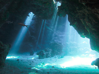 Wall Murals Green blue Underwaterphoto of scenery with sunlight and beams underwater