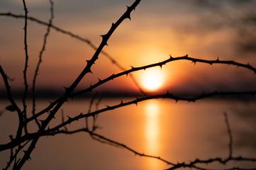 sundown branches