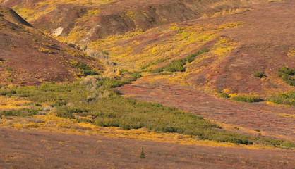 Brush filling a gravel stream flow down a hillside snaking spilling green and yellow through the red of an Alaskan fall