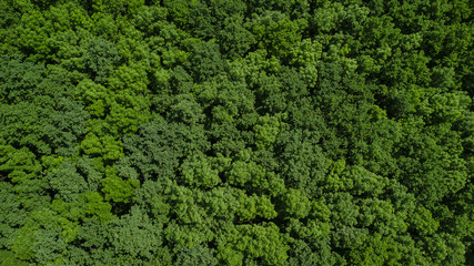 Drone's Eye View - aerial top down foliage trees background, Caucasus, Russia.