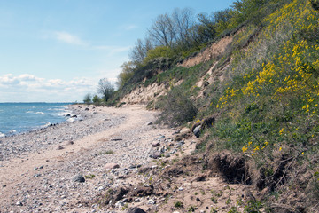 Steilküste mit Wildblumen im Frühling Insel Rügen