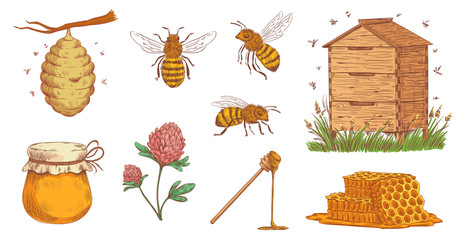 Hand drawn honey bee. Beekeeper engraving, bees honeycomb and vintage beekeeping farm vector illustration set