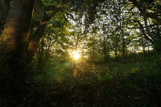 Sunburst in the forest at sunset