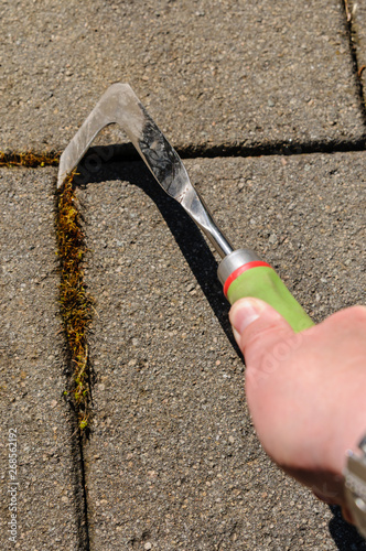 Using a patio knife to remove moss from cracks in paving on