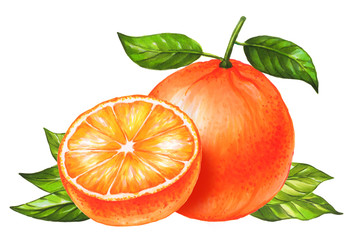Orange fruit isolated on white background. Watercolor and marker art. Botanical Illustration. Perfect for elemen for design, print, greeting card.