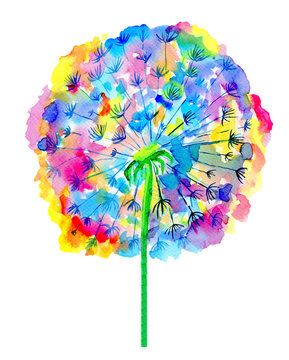 Colorful watercolor dandelion illustration. Hand painted flower isolated on white background.
