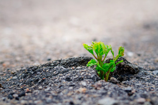 Small and green plant grows through urban asphalt ground. Power of nature.Green plant growing from crack in asphalt on road
