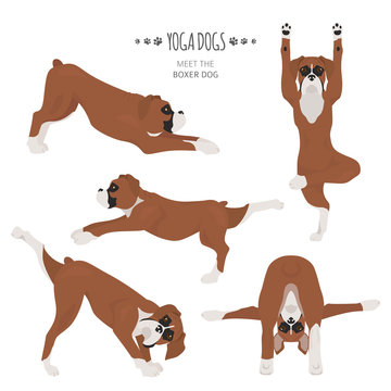 Yoga dogs poses and exercises. Boxer dog clipart