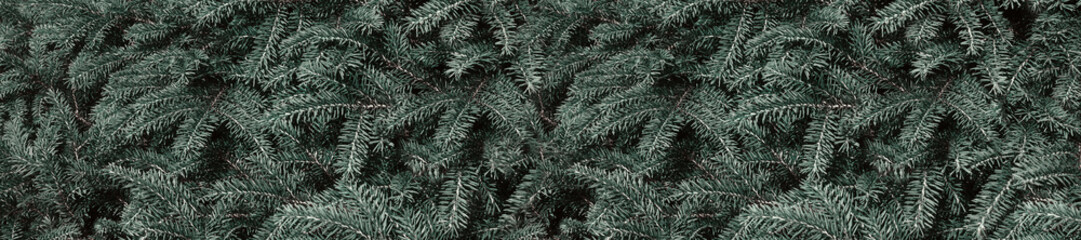 Wall Mural -  Panorama conifer evergreen spruce background.